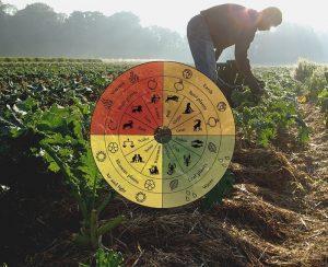 Agricoltura biodinamica si basa sulla visione spirituale antroposofica del mondo