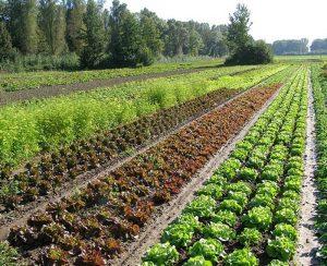 Agricoltura biodinamica si pone l'obiettivo di apportare benefici alla produzione agricola ed alla qualità di tutti i prodotti, in modo da renderla ecosostenibile