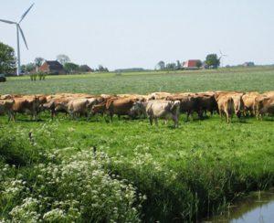Agricoltura biodinamica investe sulle tecnologie alternative