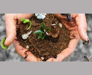 Agricoltura biodinamica è in grado di depurare terreni inquinati da anni di colture trattate chimicamente