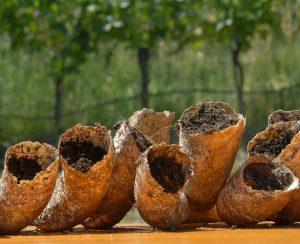 Agricoltura biodinamica risale ai primi anni del '900