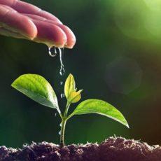 Agricoltura biodinamica: agricoltura energetica alternativa