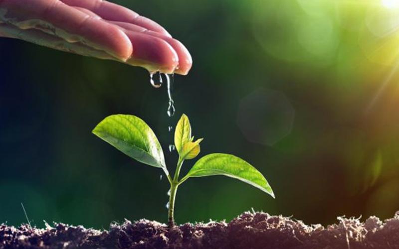 Agricoltura biodinamica è un'agricoltura ecosostenibile che si basa sui principi esoterica